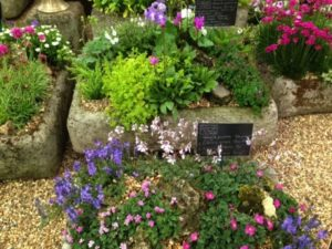 Troughs of delightful alpines Image: Jean Vernon