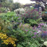 The Driftwood Garden