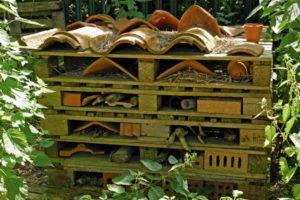pallet bug house