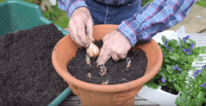 How to Layer Bulbs YouTube
