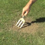 Fix Patches in your Lawn