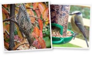 Gardening Club Photo Competition Winners - November