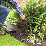 Refresh your Flowerbeds