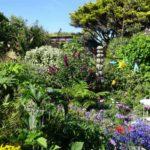 Drift Garden