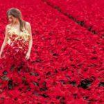 Poinsettia dress