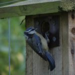 Haiths Nest Box