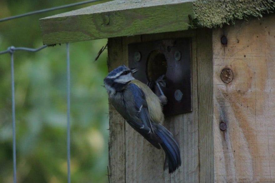 Haiths Nest Box