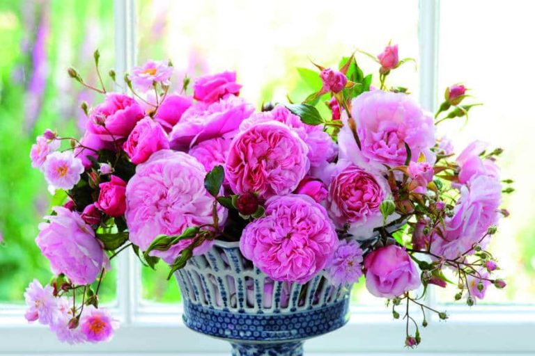 roses cut flowers