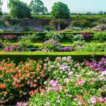 Renaissance Garden at David Austin Roses