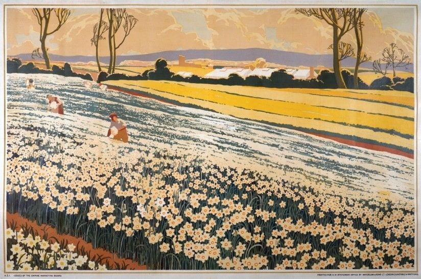 Daffodil Field Paintings