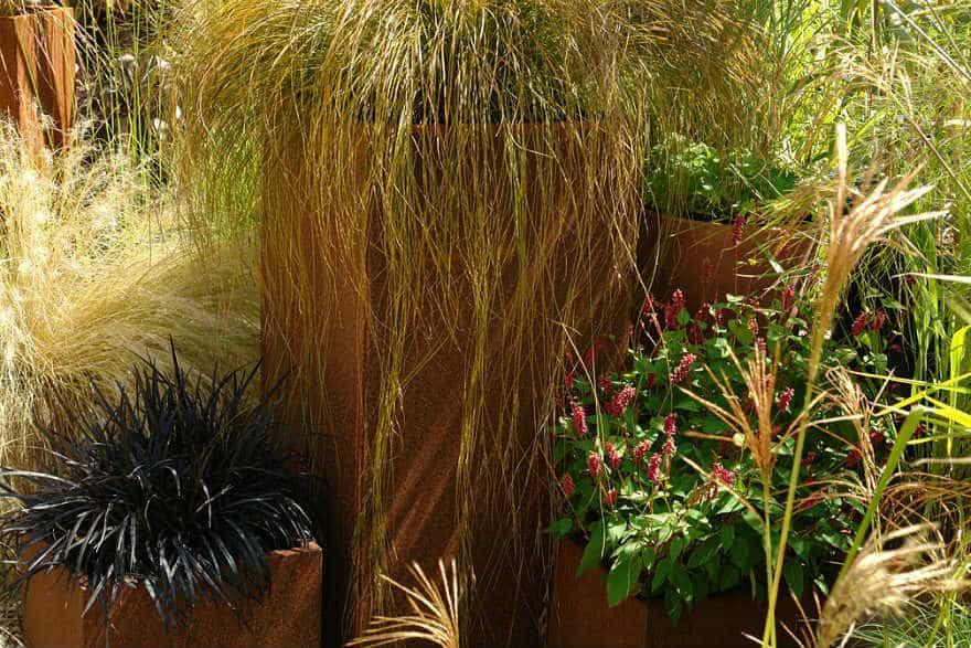 Five Great Grasses For Containers, Tall Potted Plants Patio Privacy Nz