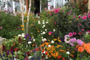 Winning Gardens, QVC Products ...