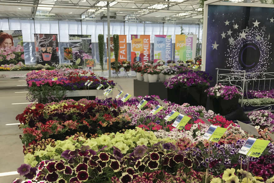 Flower Trials in The Netherlands