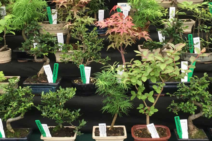 Is Bonsai The Next Gardening Trend?