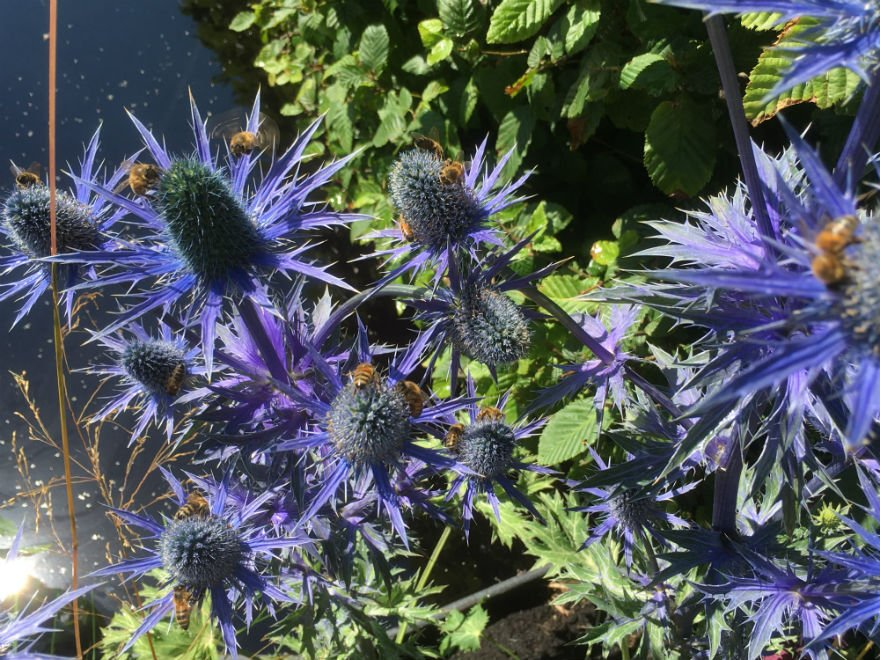 What summer plants attract bees?