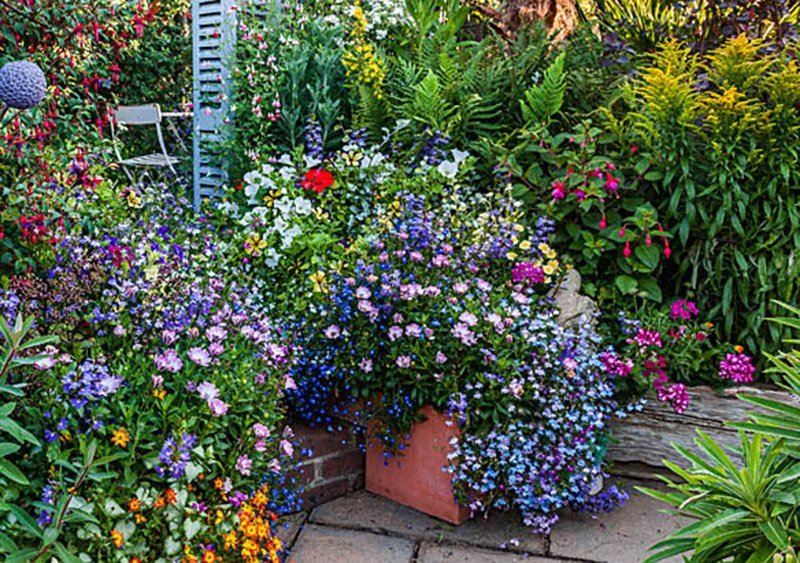 What Bedding Plants Are Best For, What Does Bedding Plant Mean