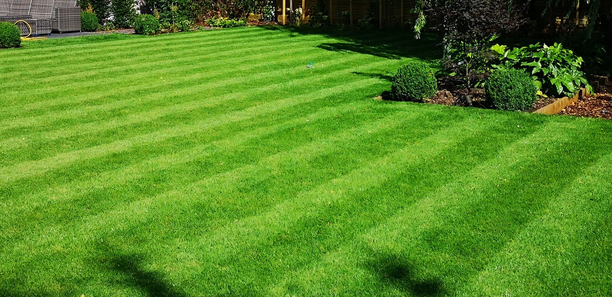 How do I keep my lawn looking green and lush?