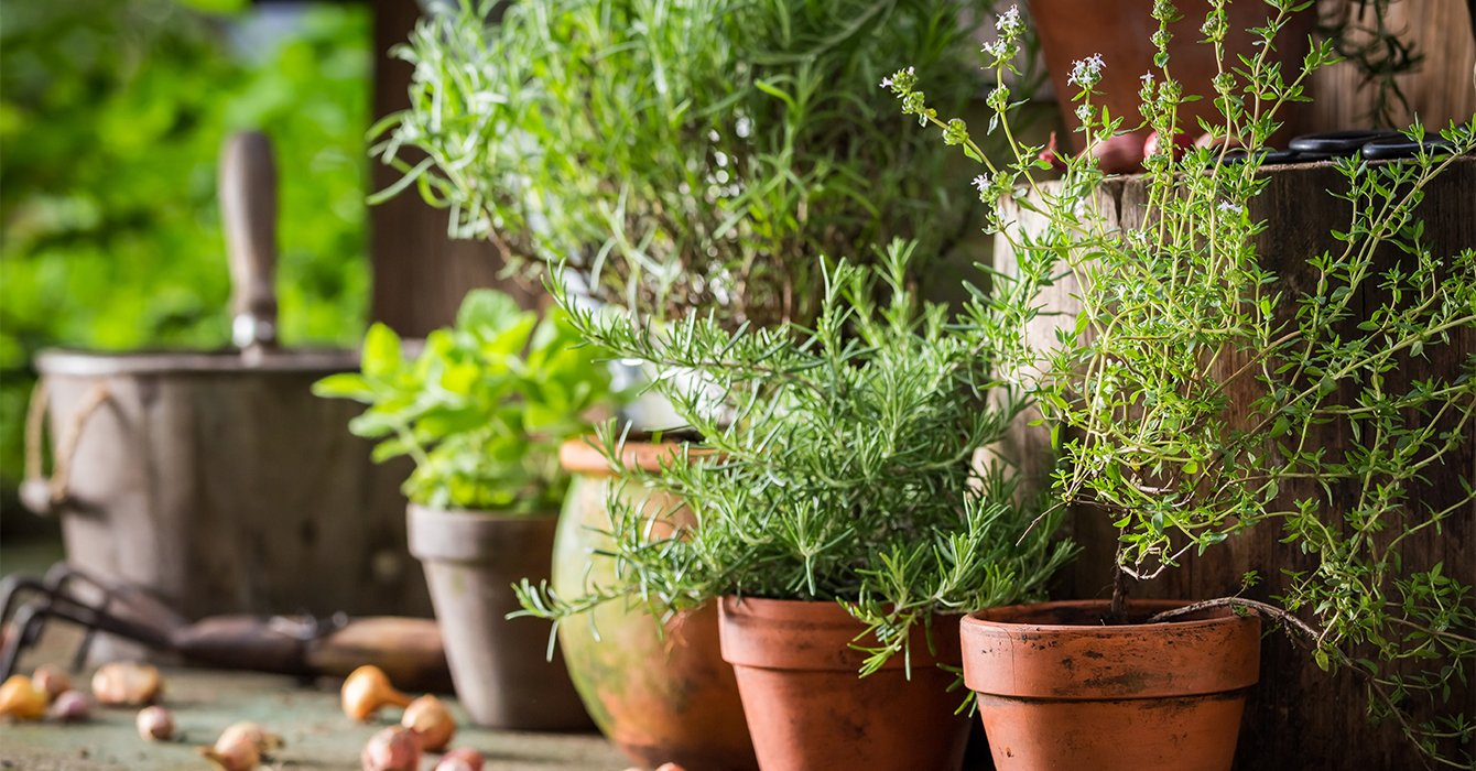 collection of herb pots