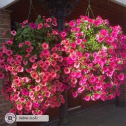 Flower Power Premium Plant Food 2kg