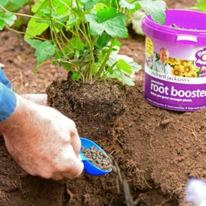 Planting & Feeding