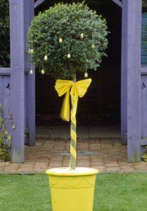Decorated standard bush. Image: Clive Nichols
