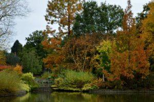 The Wild Garden at Wisley