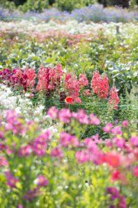 Green & Gorgeous flower fields