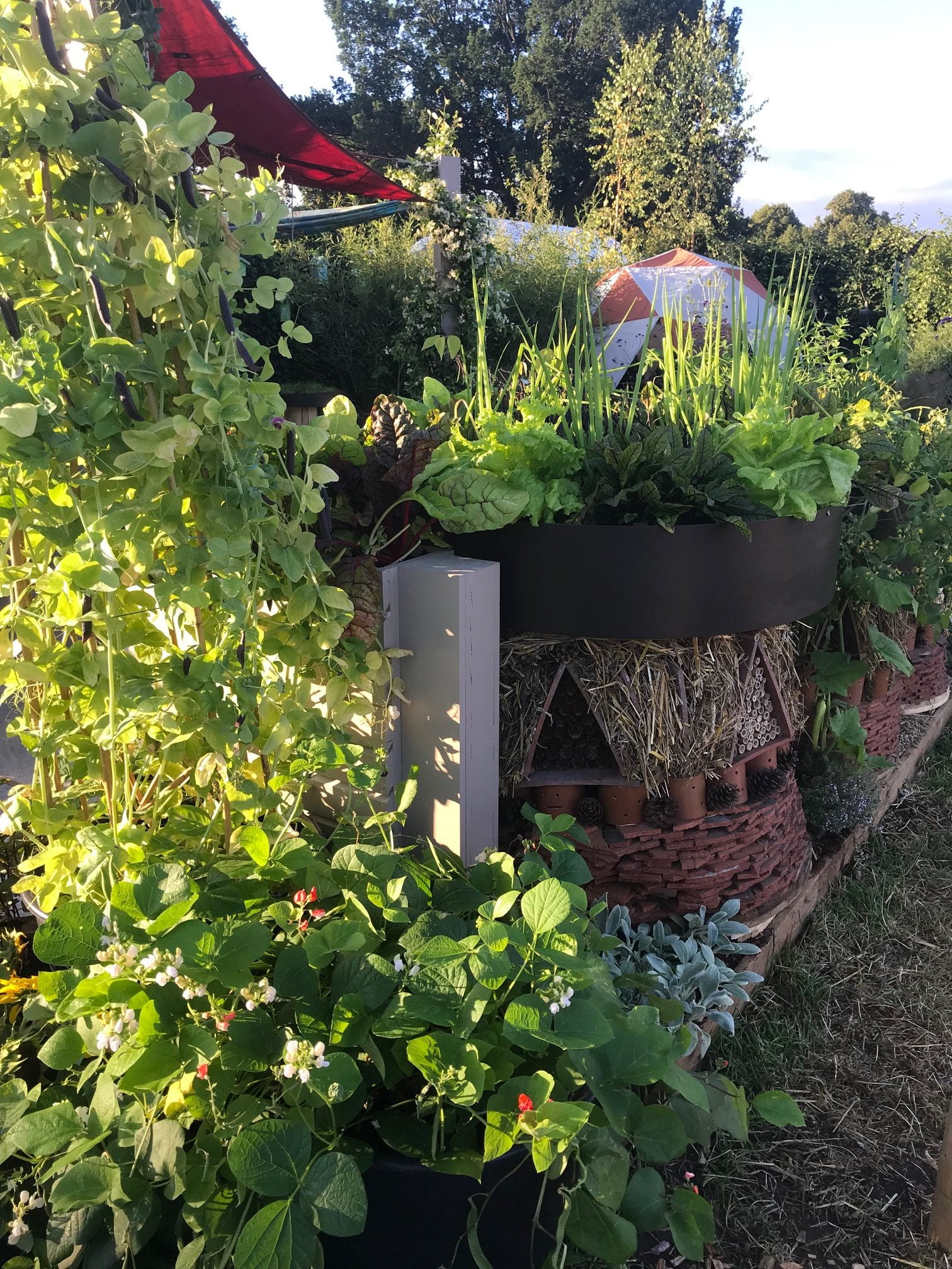 Year of Green Action Garden