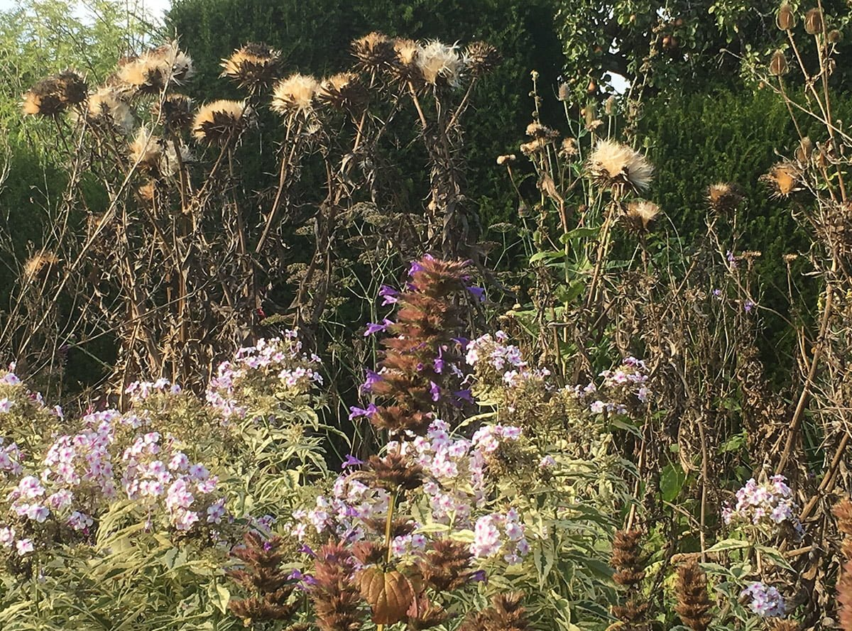flowers with seed heads