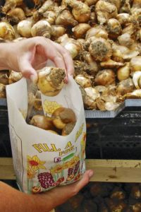 bag of bulbs
