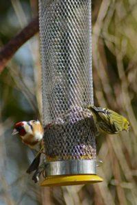 birde feeder