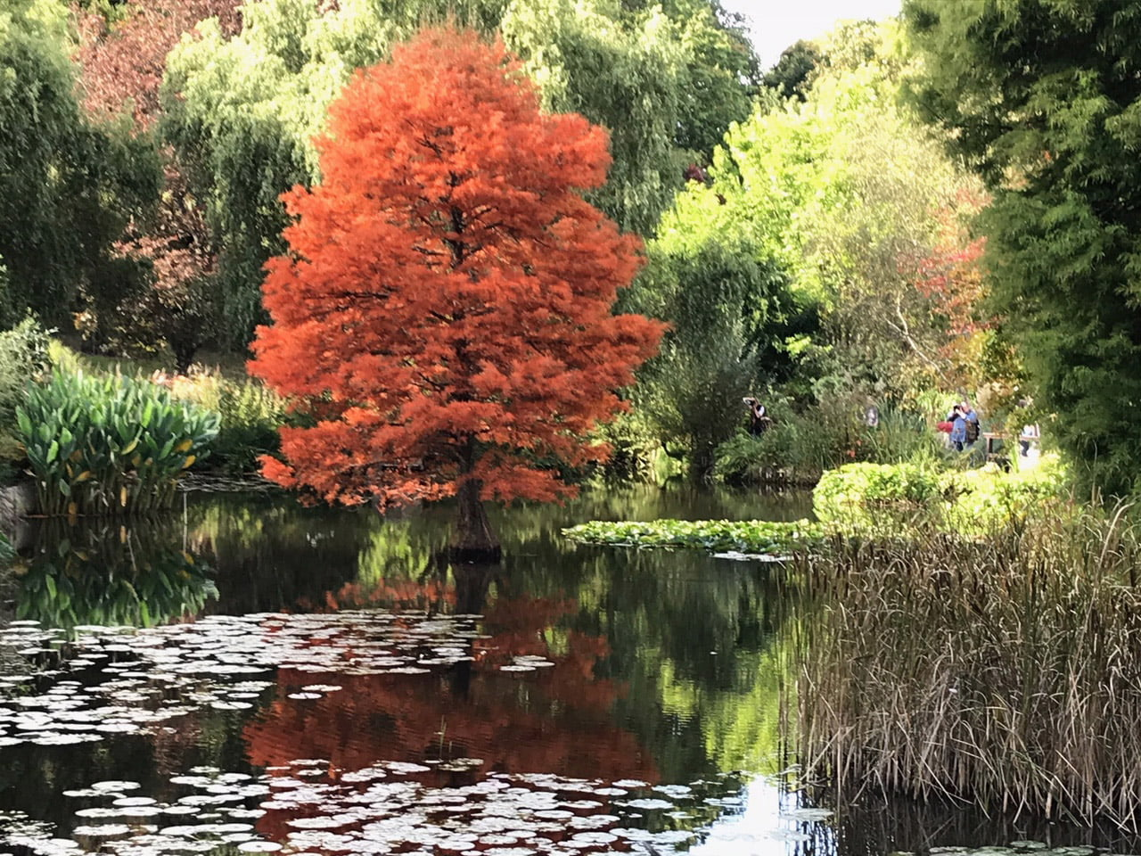 Spectacular autumnal reflections
