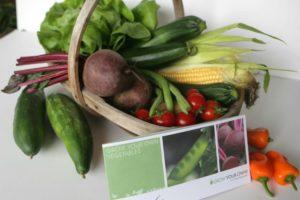Basket of veg from Pippa Greenwood