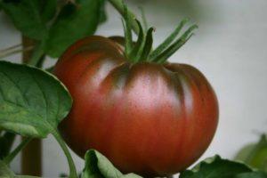 Beefsteak tomato.