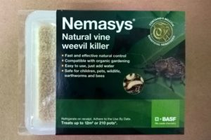 Nemasys natural vine weevil killer