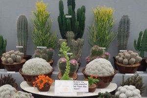 Craighouse Cacti