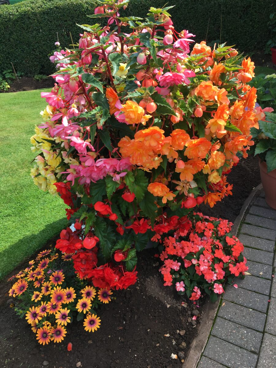 mixed flower container
