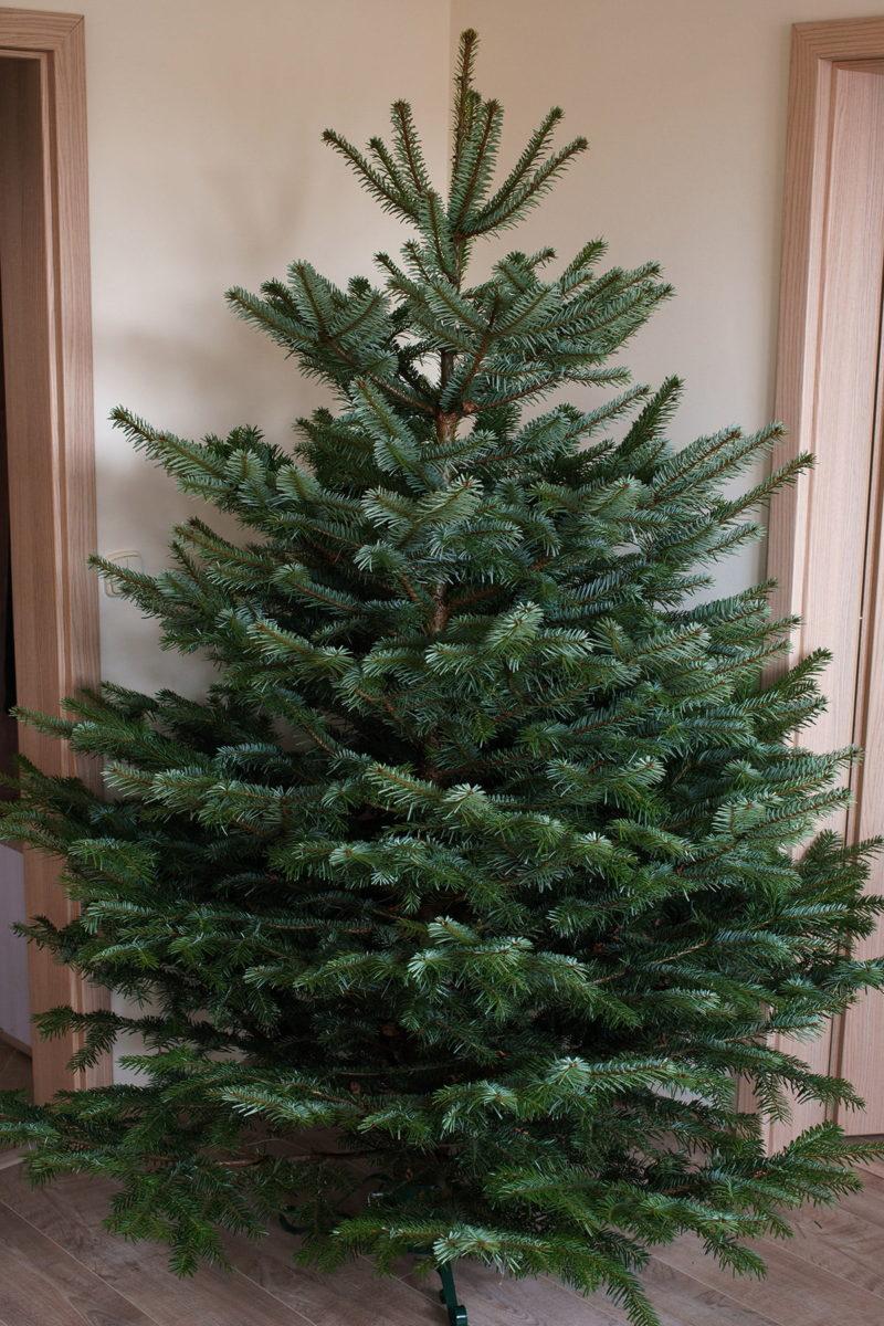 undecorated Christmas tree indoors