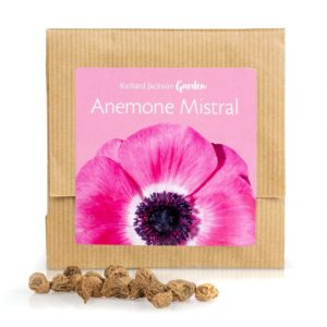 Richard Jackson Anemone Mistral in gift pack