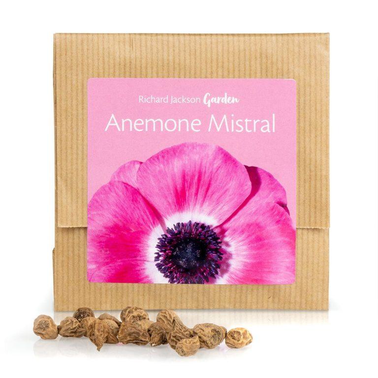 Richard Jackson Anemone Mistral in gift pack
