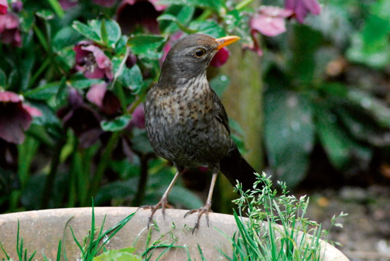 blackbird perched on bowl