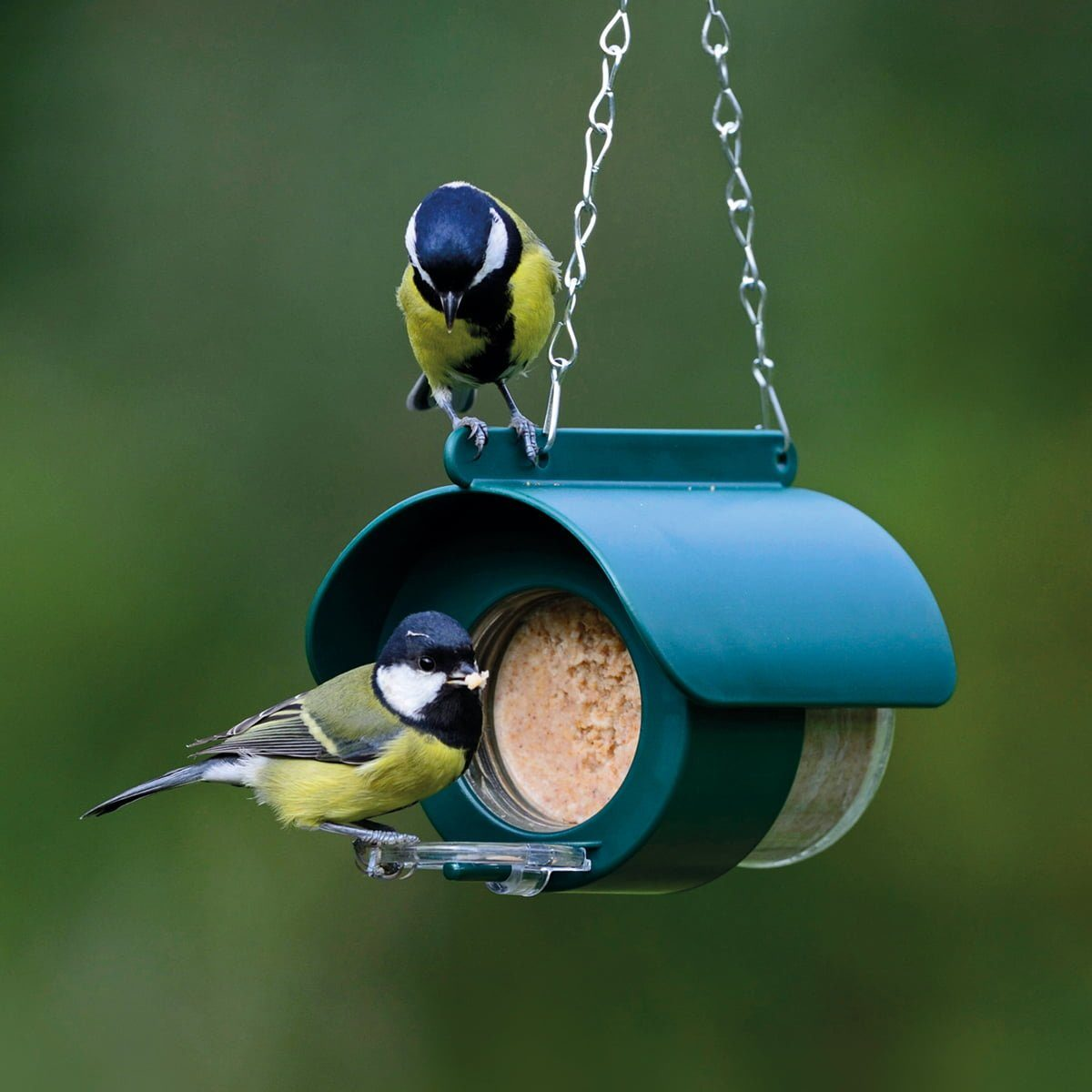 hanging peanut butter feeder with blue tits