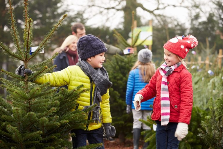 young boy and girl choosing Christmas tree
