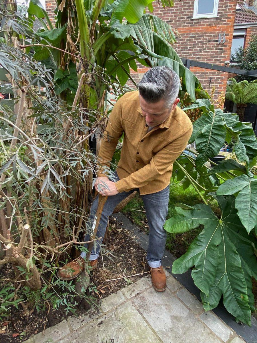 Martyn Cox digging around base of cut leaf black elder