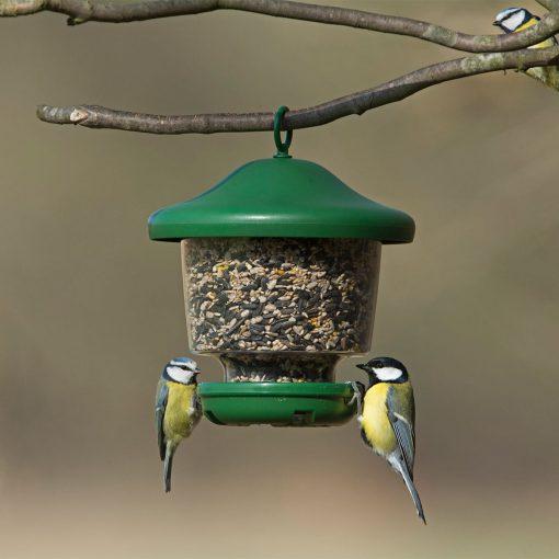 Jacobi Jayne My Favourites hanging bird feeder with coal tit and blue tit feeding
