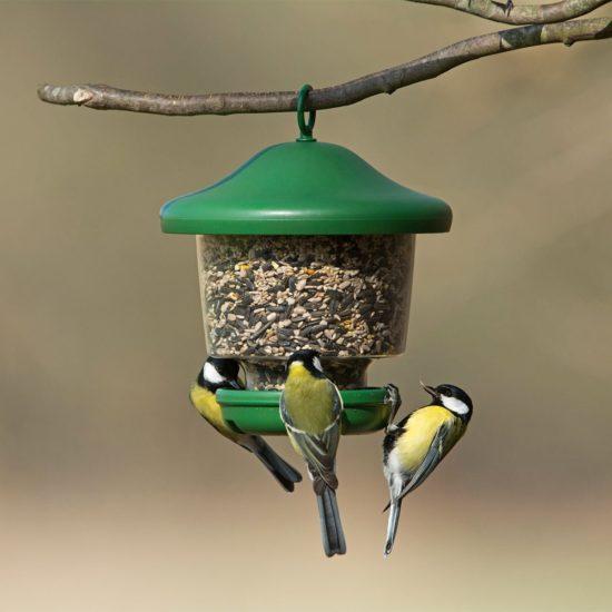 Jacobi Jayne my favourites hanging bird feeder with 3 coal tits feeding