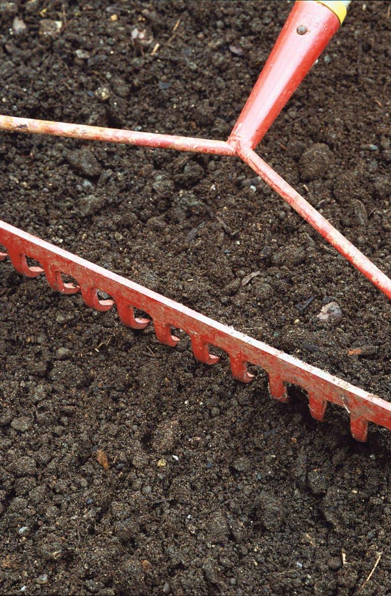 raking soil to prepare a lawn