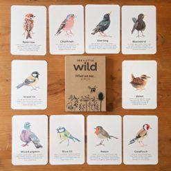 UK Birds Nature Cards
