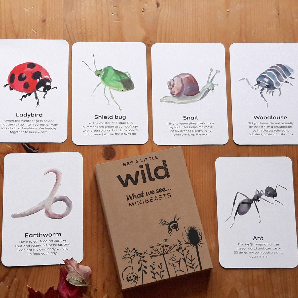 UK Minibeasts Nature Cards