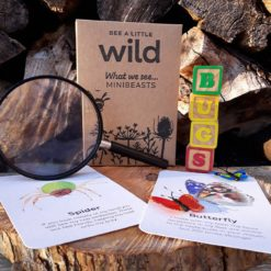 Minibeasts Nature Cards